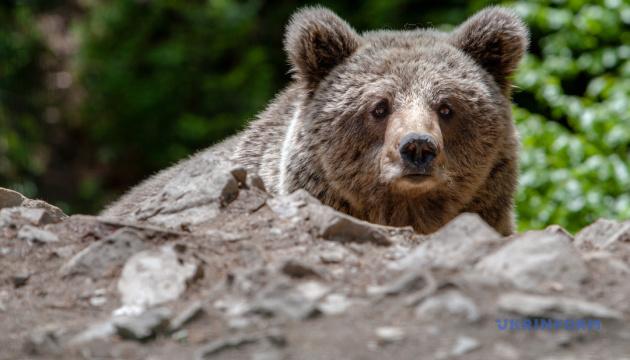 Photo of В Киевском зоопарке проснулись медведи