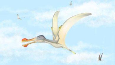 Photo of Ученые обнаружили три новых вида птерозавров в Сахаре