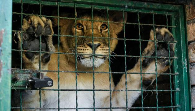 Photo of Венский зоопарк перешел на онлайн презентации животных
