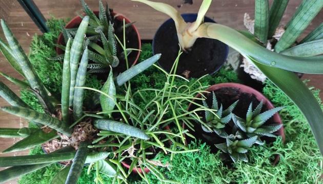 Photo of Коллекцию экоцентра Полесского университета пополнили экзотические растения