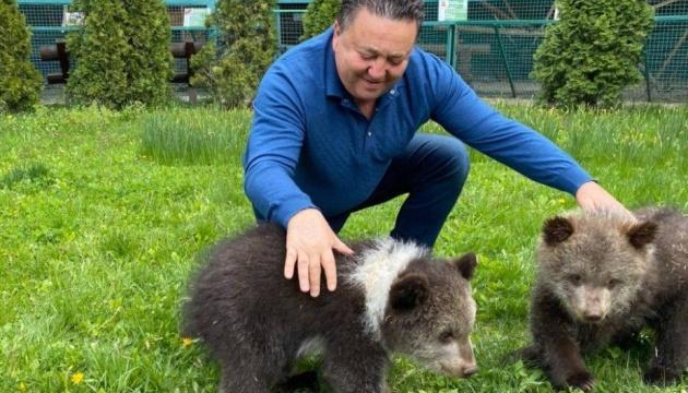 Photo of В экопарке под Харьковом вывели на первую прогулку медвежат, которые родились в этом году