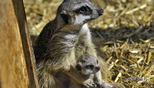 Photo of Стало известно, когда Подольский зоопарк начнет принимать посетителей