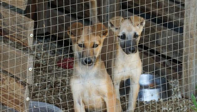 Photo of В Ужгороде выделили 1,5 миллиона на вольеры для животных в приюте