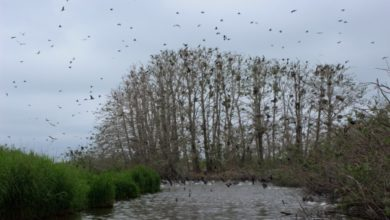 Photo of Нацпарк на Одесщине отправит туристов до «Мертвого леса»