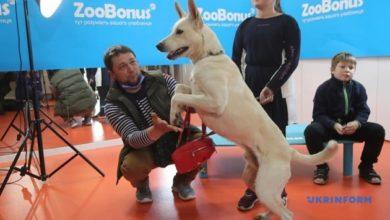 Photo of Высокие уши: киевский пес из приюта установил национальный рекорд