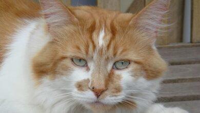 Photo of В Британии умер старейший в мире кот