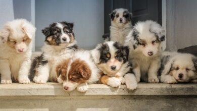 Photo of Канада запретила коммерческое ввоз щенков из Украины