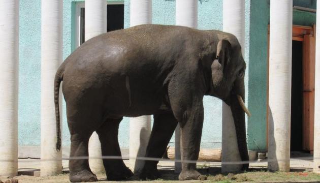 Photo of В Николаевском зоопарке отметили юбилей слона Дінкара