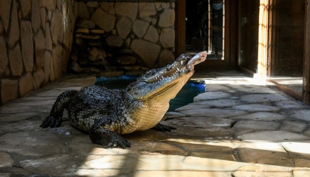 Photo of В бердянском зоопарке «Сафари-парк» открылся террариум
