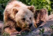 """Photo of В медвежий приют на Львовщине перевезли двух """"переселенцев"""" из Донбасса"""