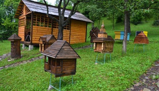 Photo of В Колочаве появилось пчелиное «деревня»