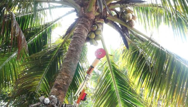 Photo of В Индии создали робота, который собирает кокосы на деревьях
