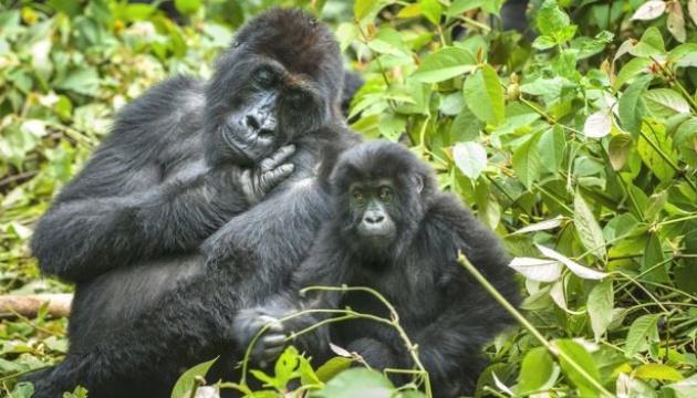 Photo of Популяции диких животных сократились более чем на две трети за 46 лет