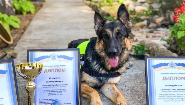 Photo of Полицейская овчарка из Николаева победила в соревнованиях по спецподготовки