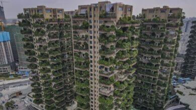 Photo of Китайский проект жилья с лесом на балконе потеряли комары
