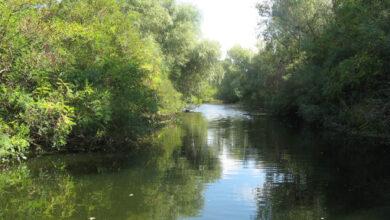 Photo of К Ковалевского леса на Николаевщине будет курсировать водный экспресс
