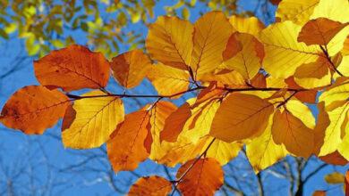 Photo of 1 октября: народный календарь и астровисник