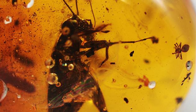 Photo of Ученым удалось выделить фрагменты ДНК насекомых, «замурованных» в смоле