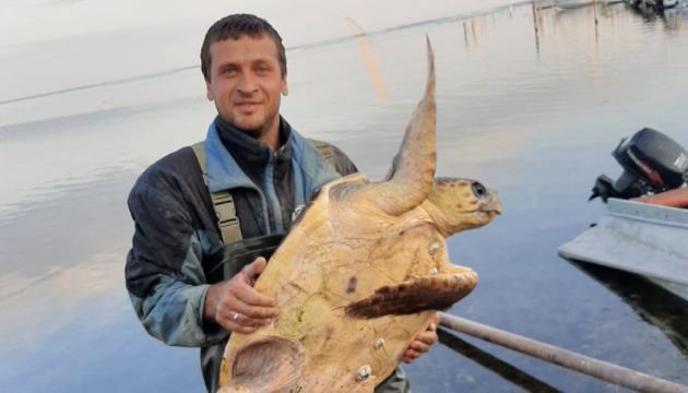 Photo of На Херсонщине рыбаки поймали средиземноморскую черепаху