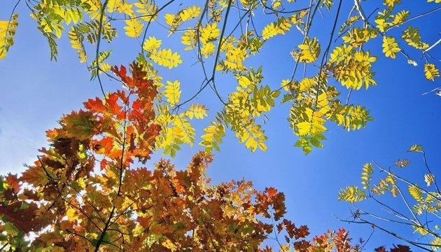 Photo of 12 октября: народный календарь и астровисник