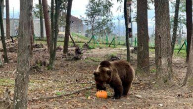 Photo of Медвежий приют «Домажир» зовет на «тыкве выходные»