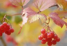Photo of 29 октября: народный календарь и астровисник