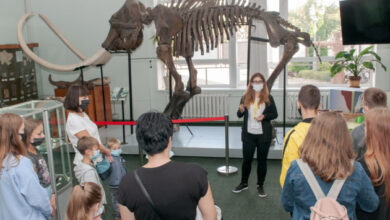 Photo of Астрагал и потусторонняя археология: в Виннице «вытянут» скелеты из музейной шкафы