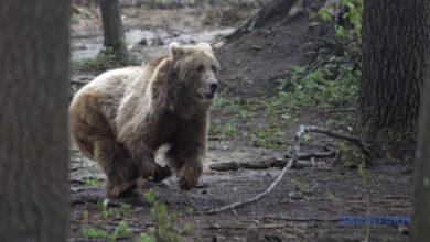 Photo of Тарпаны, «Бэмби» и медведи: Львовщина назвала сезонные туристические «магниты»