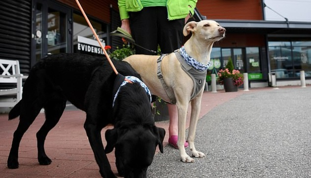 Photo of Собаки обнаруживают коронавирус, скорее ПЦР-тесты — ученые