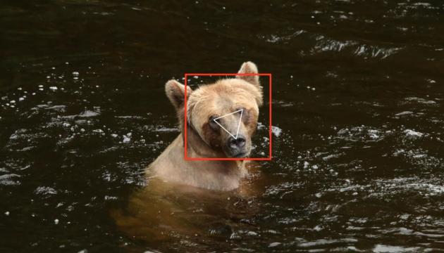 Photo of В Канаде использовали технологию распознавания лиц для отслеживания медведей гризли