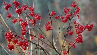 Photo of 25 ноября: народный календарь и астровисник