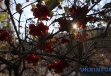 Photo of 29 ноября: народный календарь и астровисник