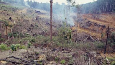 Photo of Вырубка лесов Амазонки достигла наивысшего уровня с 2008 года