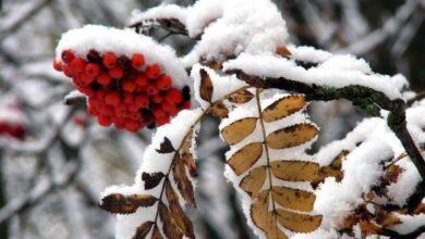 Photo of 3 декабря: народный календарь и астровисник