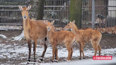 Photo of Как зимуют звери в киевском зоопарке