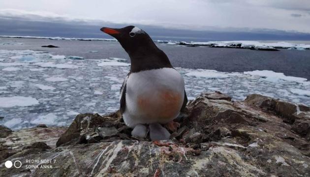 Photo of Глобальное потепление повлияло на популяции пингвинов в Антарктиде — ученый