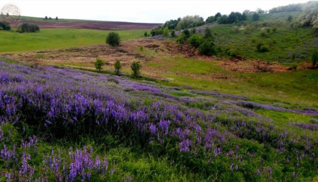 Photo of В Черкасской области инициировали создание национального парка «Холодный Яр»