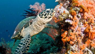 Photo of В ООН заявляют, что коралловые рифы могут исчезнуть к концу века