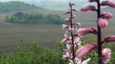 Photo of К электронного кадастра природно-заповедного фонда уже внесли 10 парков