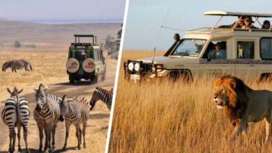 Photo of Занзибара оказалась мало: теперь чартеры с туристами полетели в Кению