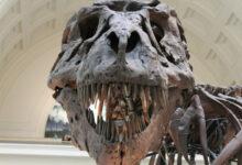 Photo of Ученые из Брюсселя выяснили условия климата Земли в эпоху динозавров